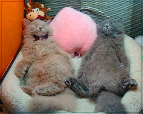 Прикольные фото кошек спящие кот и