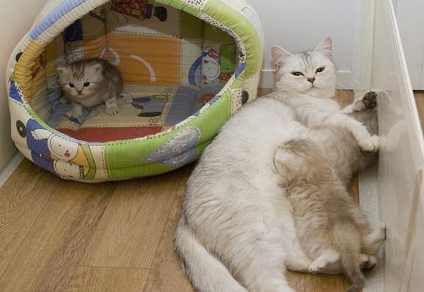 Фото как ухаживать за котами